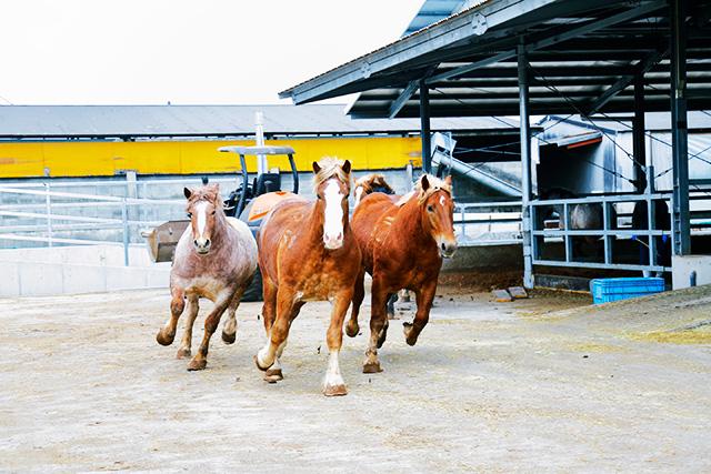 熊本の地で大事に育てられた馬 イメージ2